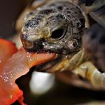 Guidelines for feeding turtle